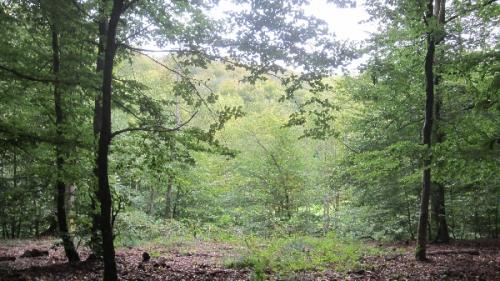 foret-ardenne